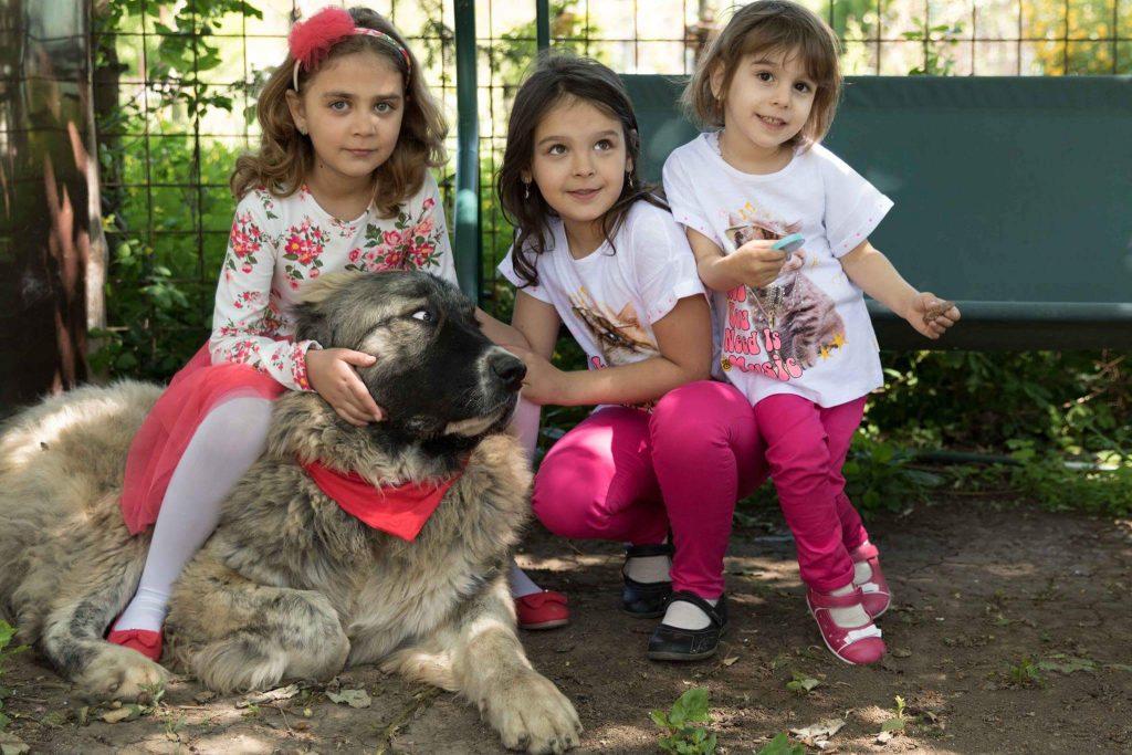 Musu Ciobanesc Caucazian si Copiii
